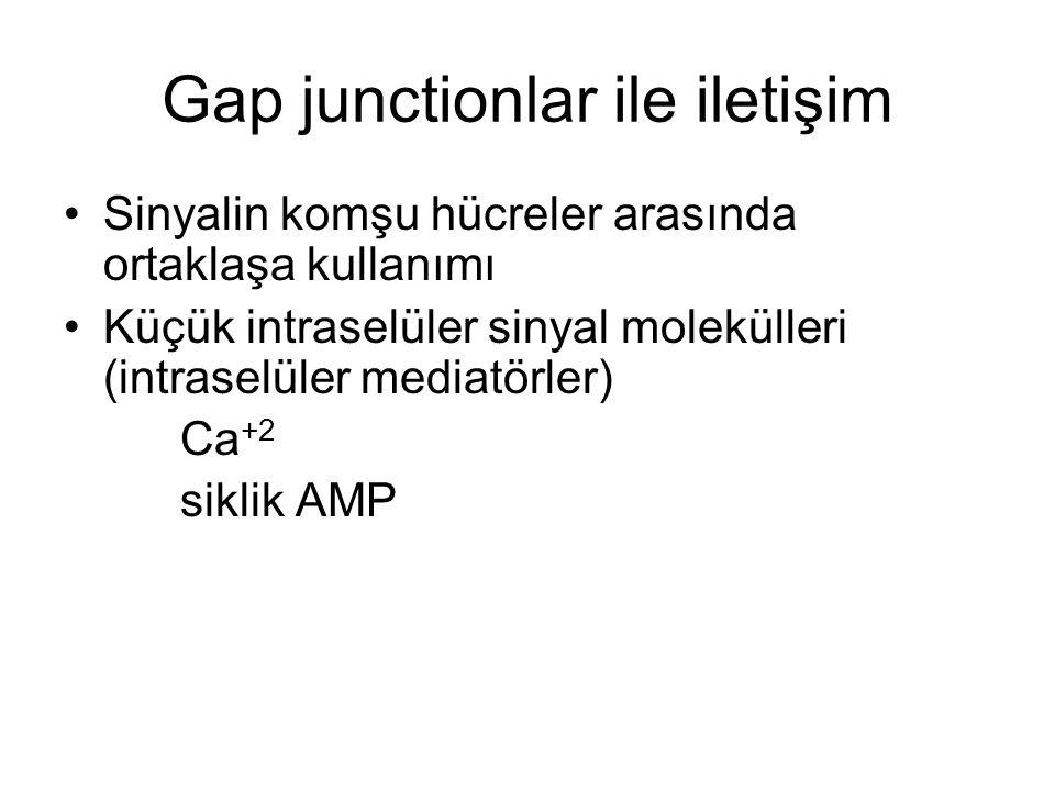 Gap junctionlar ile iletişim