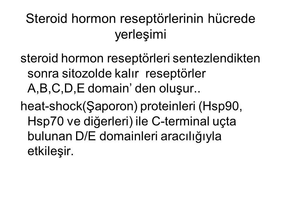 Steroid hormon reseptörlerinin hücrede yerleşimi