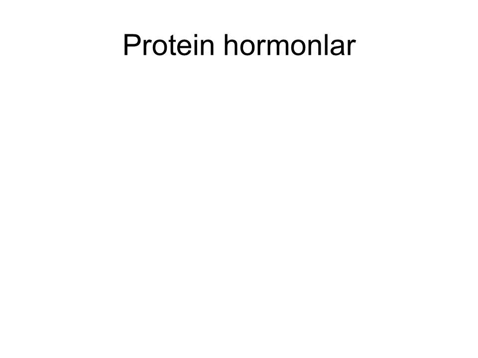 Protein hormonlar
