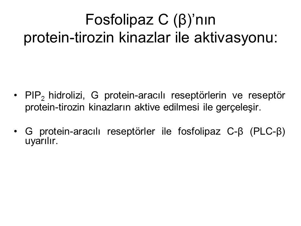 Fosfolipaz C (β)'nın protein-tirozin kinazlar ile aktivasyonu: