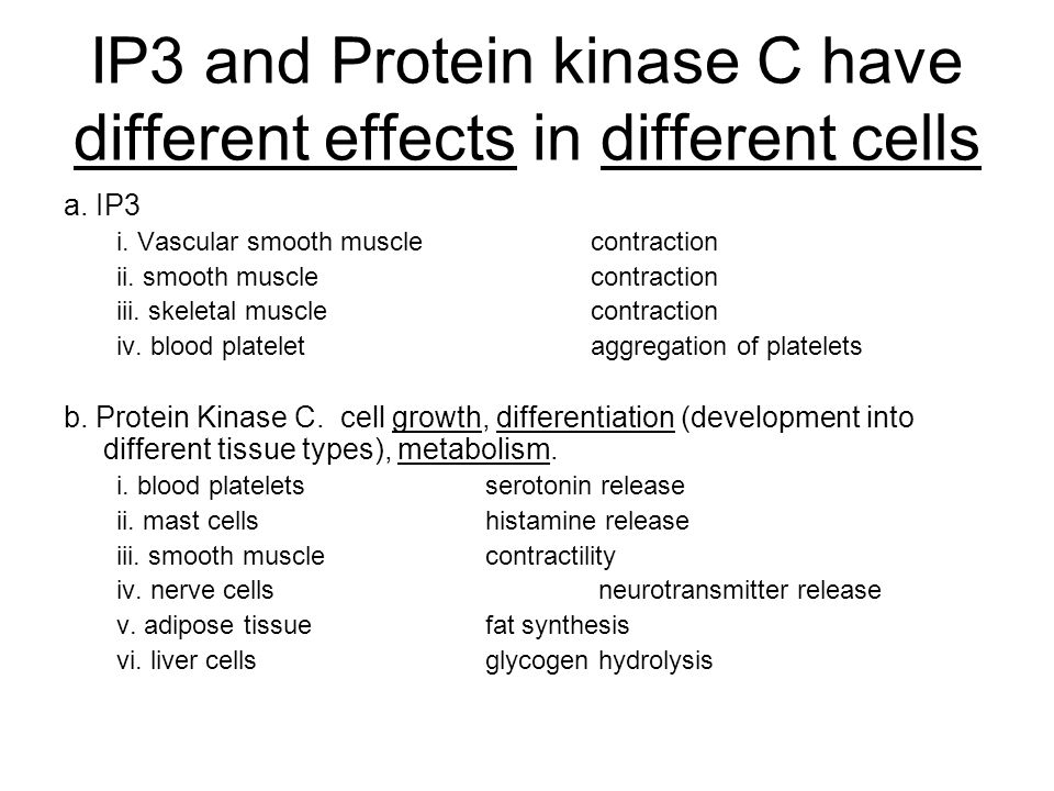 IP3 and Protein kinase C have different effects in different cells