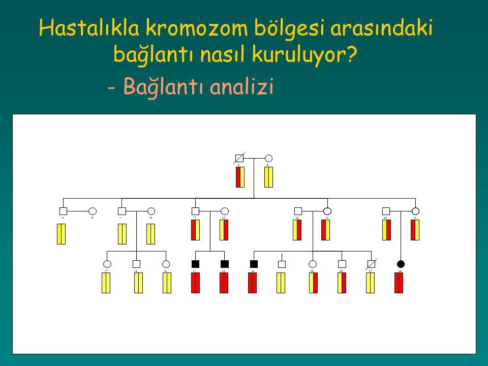 Hastalıkla kromozom bölgesi arasındaki bağlantı nasıl kuruluyor