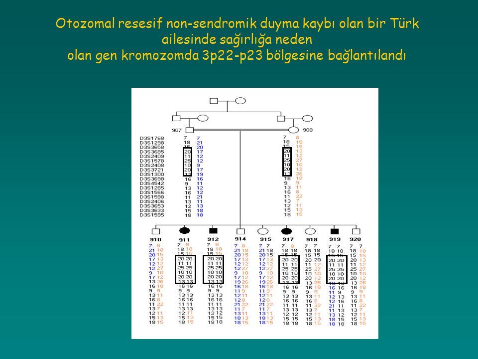 olan gen kromozomda 3p22-p23 bölgesine bağlantılandı