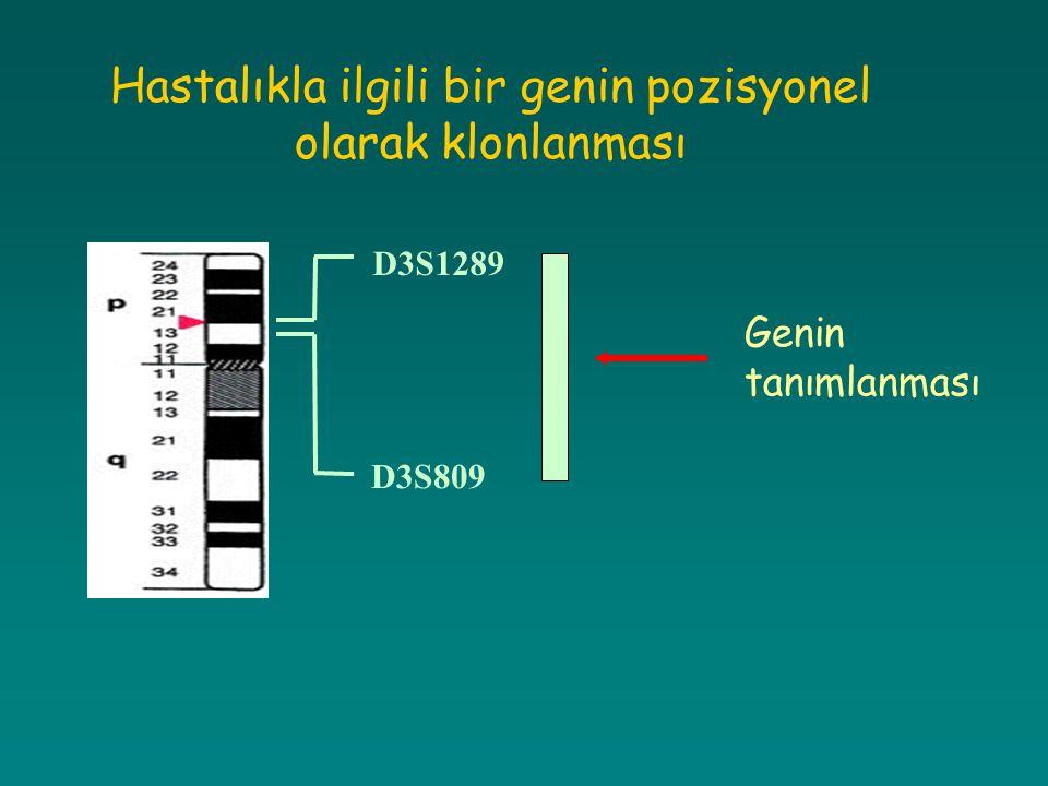 Hastalıkla ilgili bir genin pozisyonel olarak klonlanması