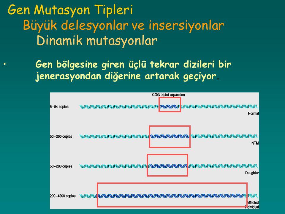 Gen Mutasyon Tipleri Büyük delesyonlar ve insersiyonlar