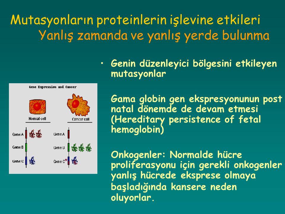 Mutasyonların proteinlerin işlevine etkileri