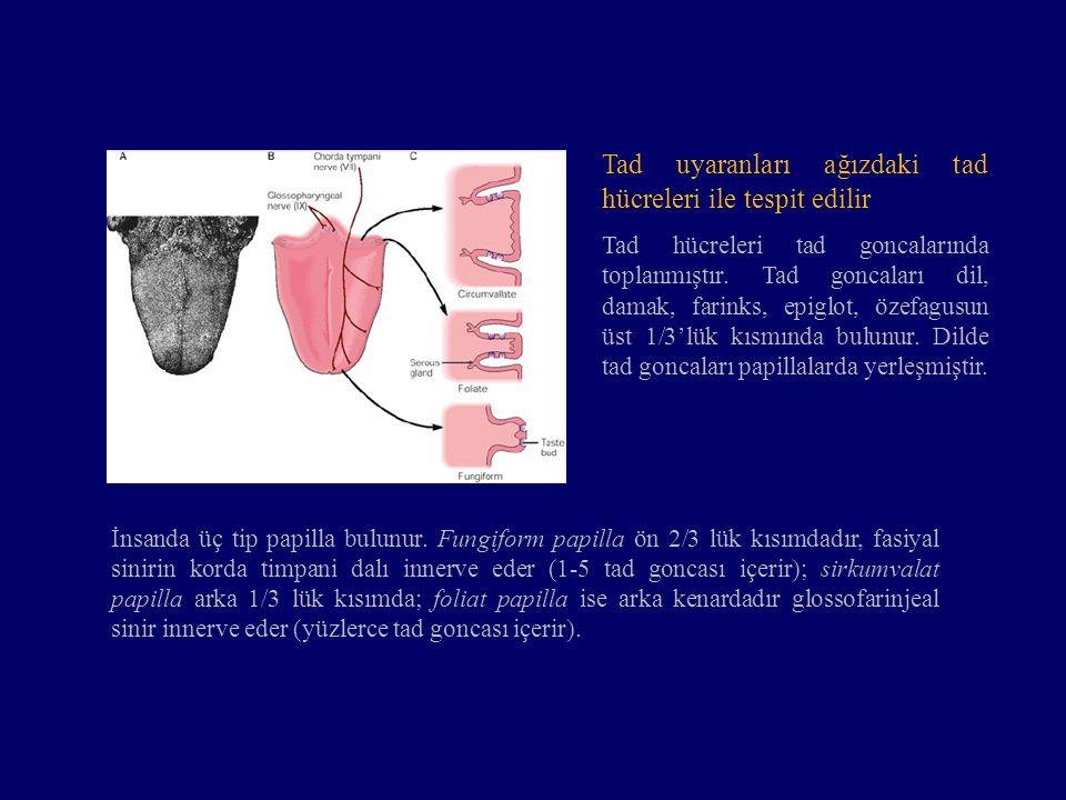 Tad uyaranları ağızdaki tad hücreleri ile tespit edilir