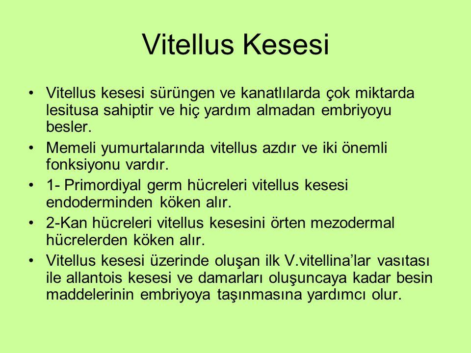 Vitellus Kesesi Vitellus kesesi sürüngen ve kanatlılarda çok miktarda lesitusa sahiptir ve hiç yardım almadan embriyoyu besler.