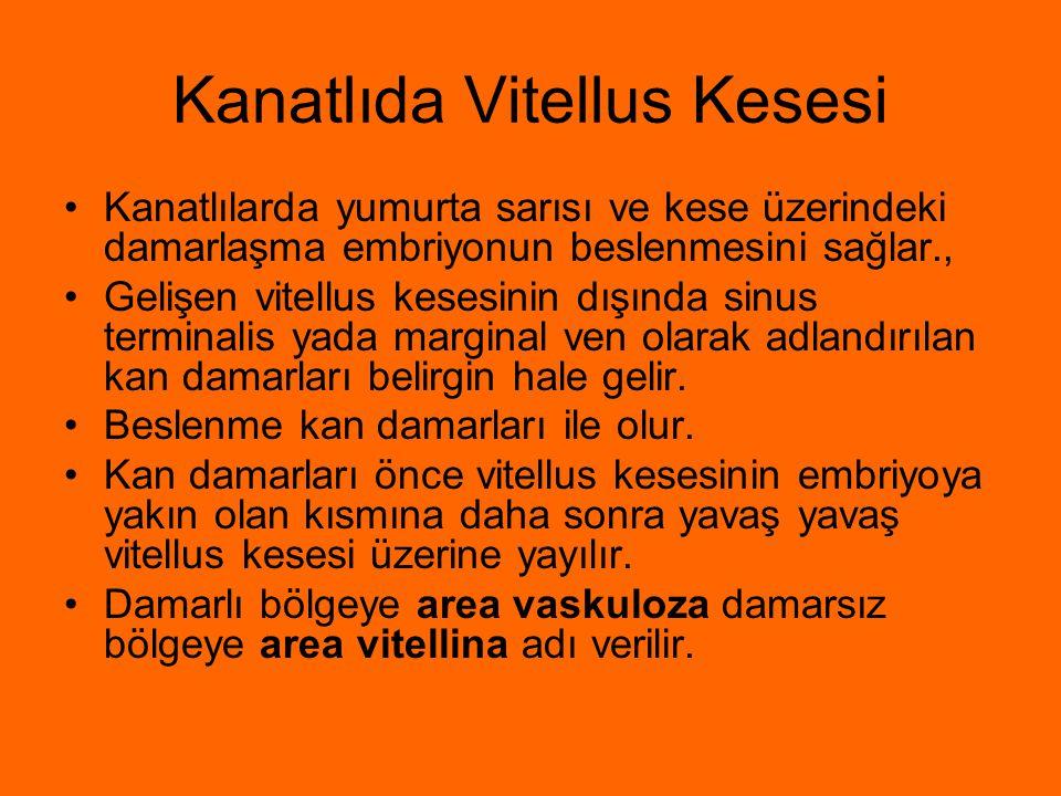 Kanatlıda Vitellus Kesesi