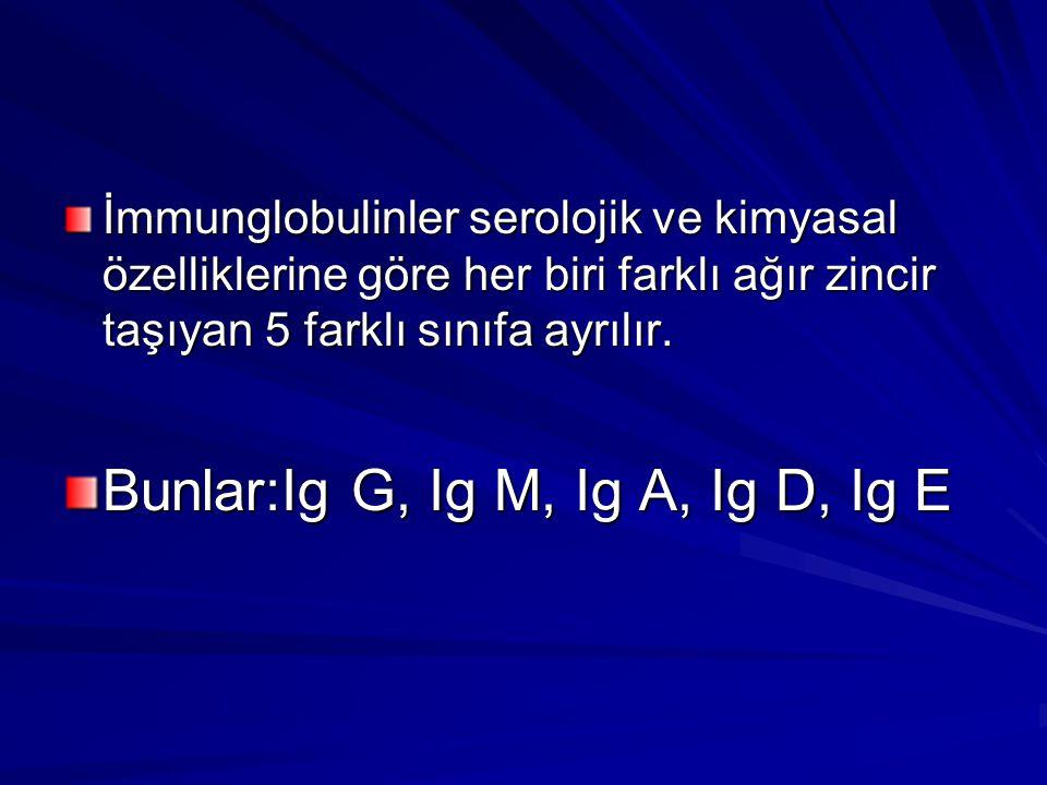 Bunlar:Ig G, Ig M, Ig A, Ig D, Ig E