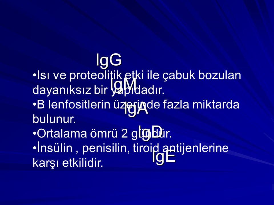 IgG IgM. IgA. IgD. IgE. Isı ve proteolitik etki ile çabuk bozulan dayanıksız bir yapıdadır. B lenfositlerin üzerinde fazla miktarda bulunur.