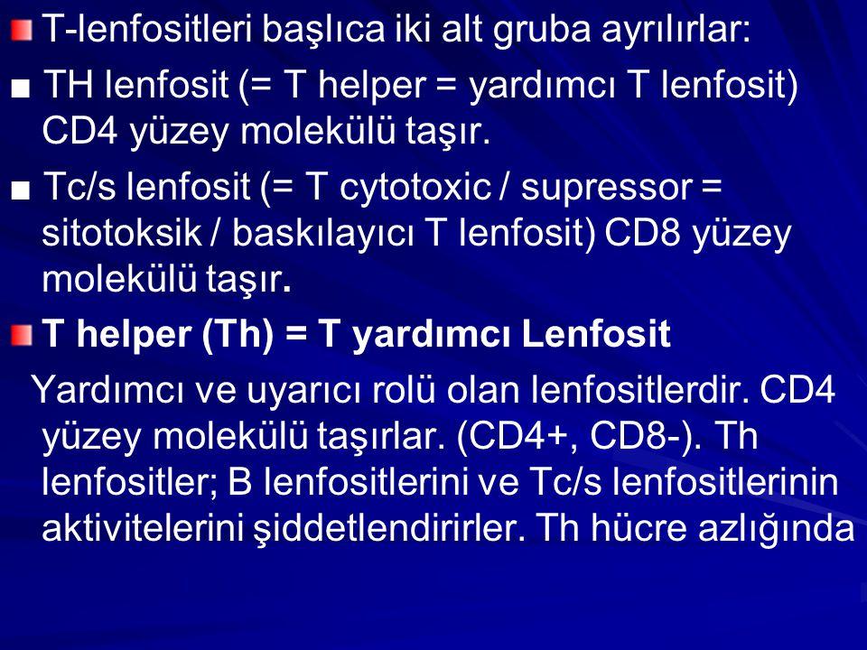 T-lenfositleri başlıca iki alt gruba ayrılırlar: