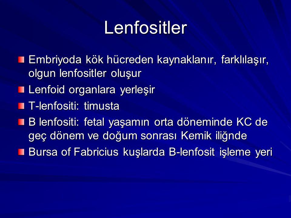 Lenfositler Embriyoda kök hücreden kaynaklanır, farklılaşır, olgun lenfositler oluşur. Lenfoid organlara yerleşir.