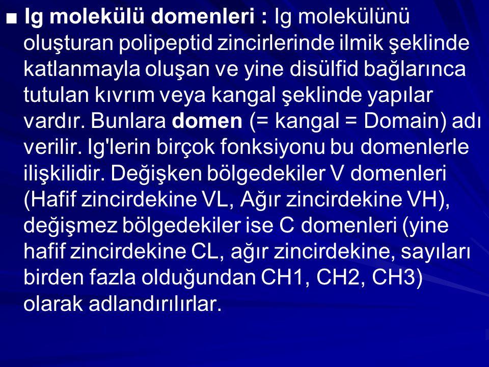 ■ Ig molekülü domenleri : Ig molekülünü oluşturan polipeptid zincirlerinde ilmik şeklinde katlanmayla oluşan ve yine disülfid bağlarınca tutulan kıvrım veya kangal şeklinde yapılar vardır.