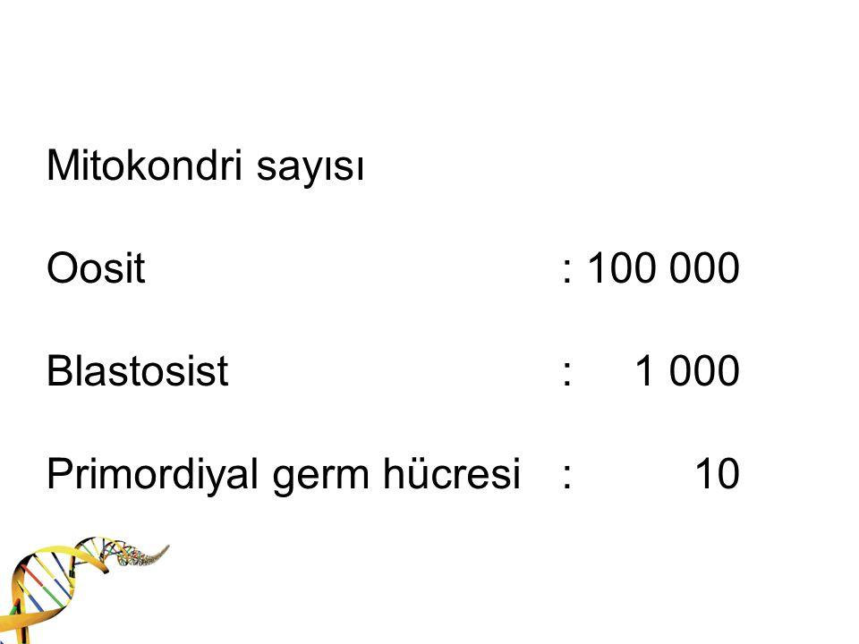 Mitokondri sayısı Oosit. : 100 000 Blastosist. : 1 000