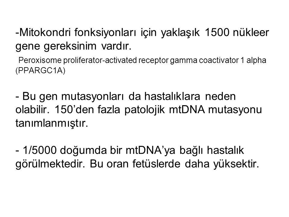 Mitokondri fonksiyonları için yaklaşık 1500 nükleer gene gereksinim vardır.