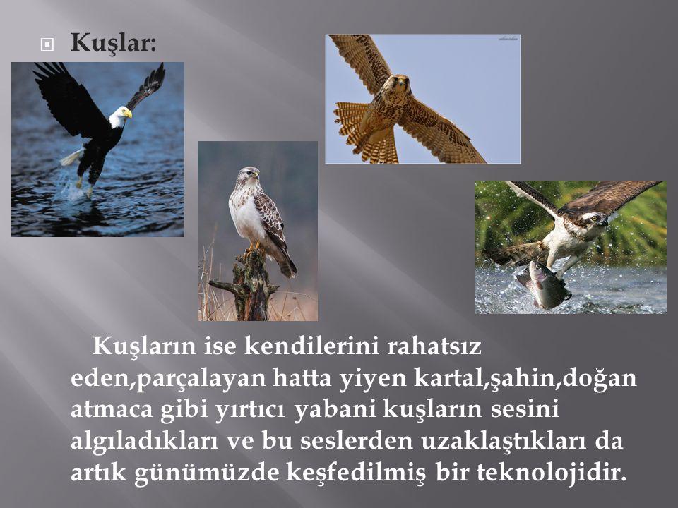 Kuşlar: