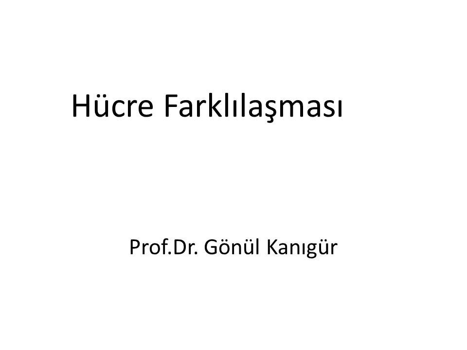 Hücre Farklılaşması Prof.Dr. Gönül Kanıgür