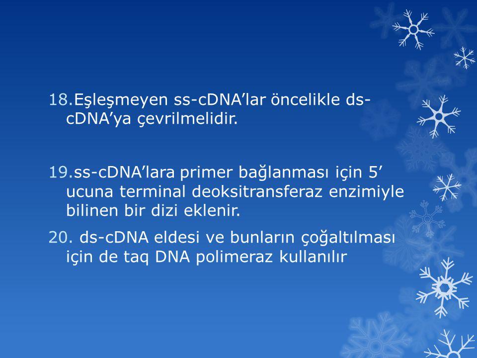 Eşleşmeyen ss-cDNA'lar öncelikle ds- cDNA'ya çevrilmelidir.