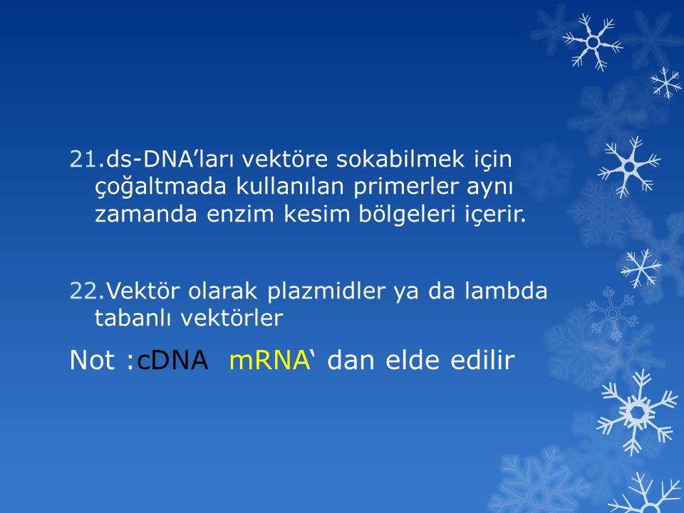 Not :cDNA mRNA' dan elde edilir