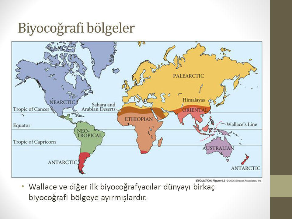Biyocoğrafi bölgeler Wallace ve diğer ilk biyocoğrafyacılar dünyayı birkaç biyocoğrafi bölgeye ayırmışlardır.