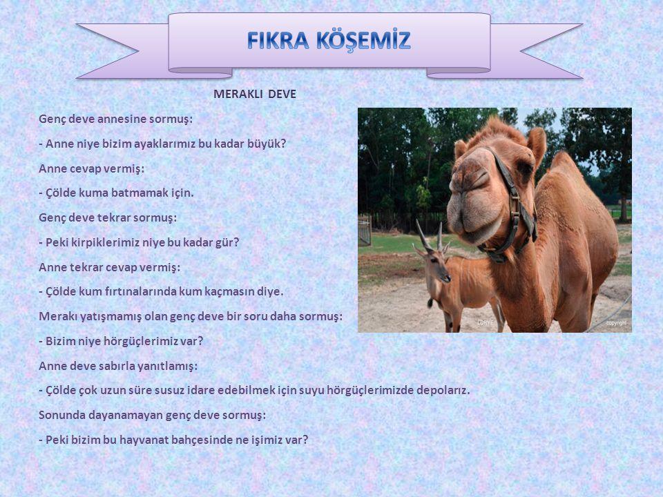 FIKRA KÖŞEMİZ MERAKLI DEVE Genç deve annesine sormuş: