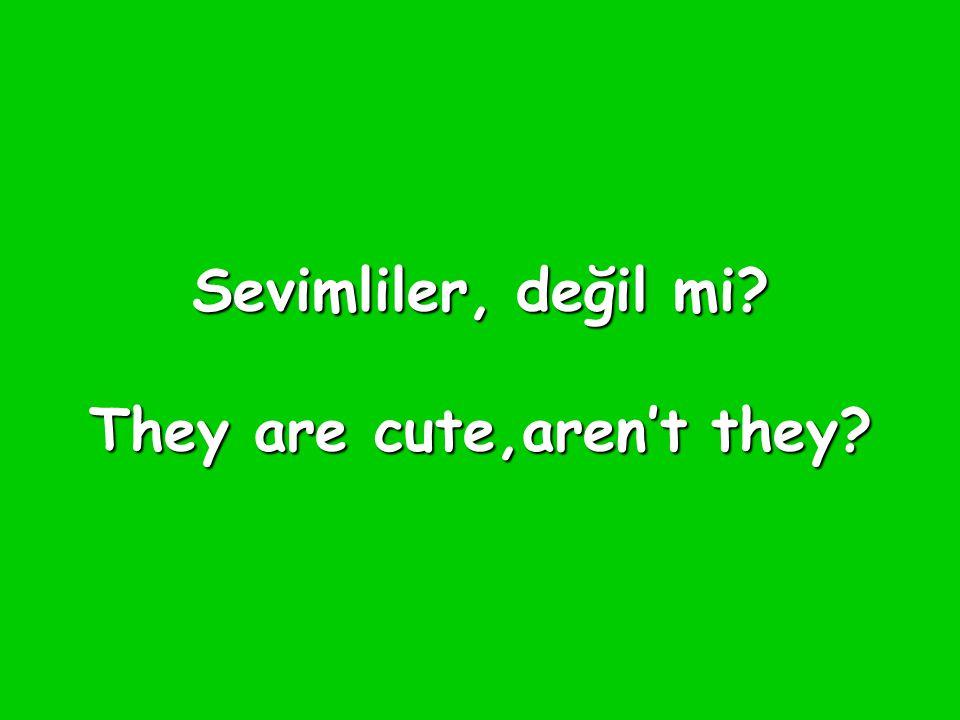 Sevimliler, değil mi They are cute,aren't they
