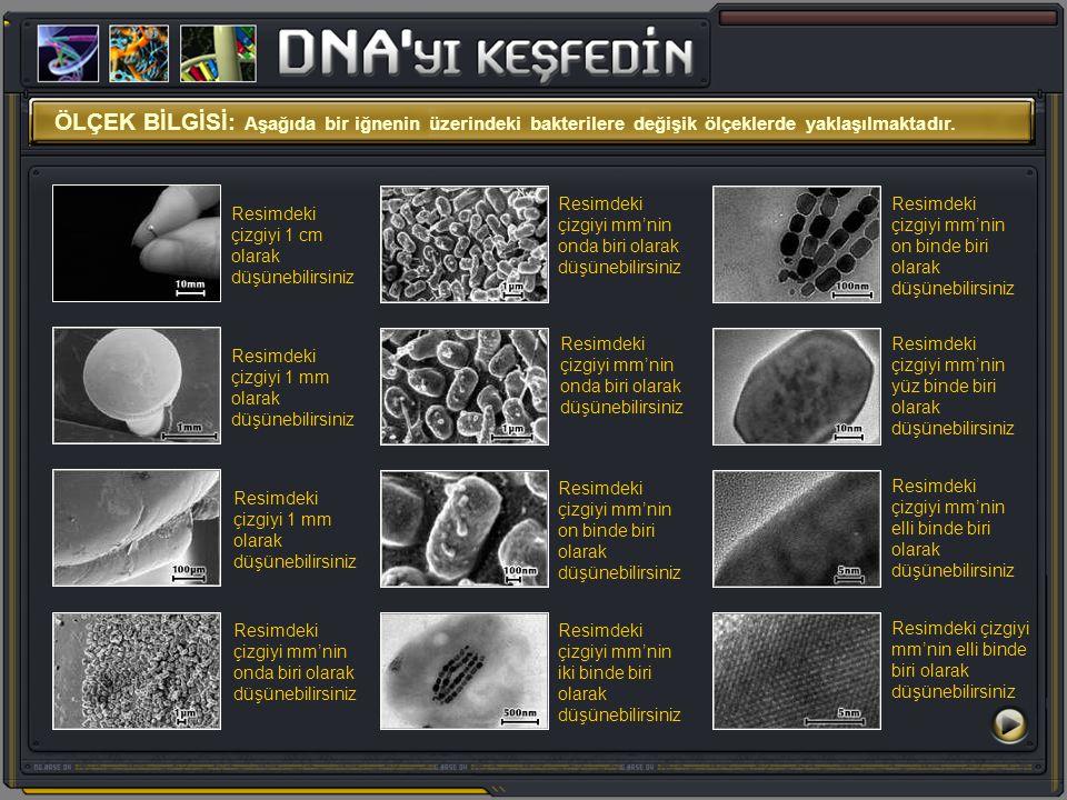 ÖLÇEK BİLGİSİ: Aşağıda bir iğnenin üzerindeki bakterilere değişik ölçeklerde yaklaşılmaktadır.