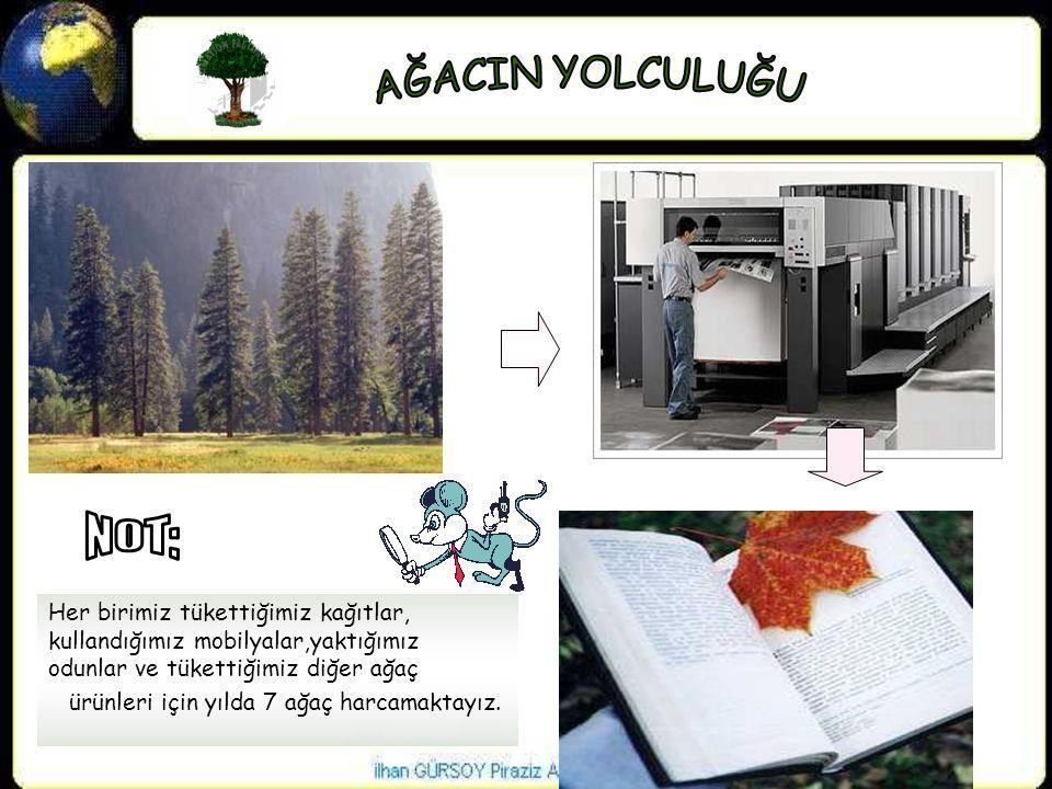 AĞACIN YOLCULUĞU NOT: Her birimiz tükettiğimiz kağıtlar, kullandığımız mobilyalar,yaktığımız odunlar ve tükettiğimiz diğer ağaç.