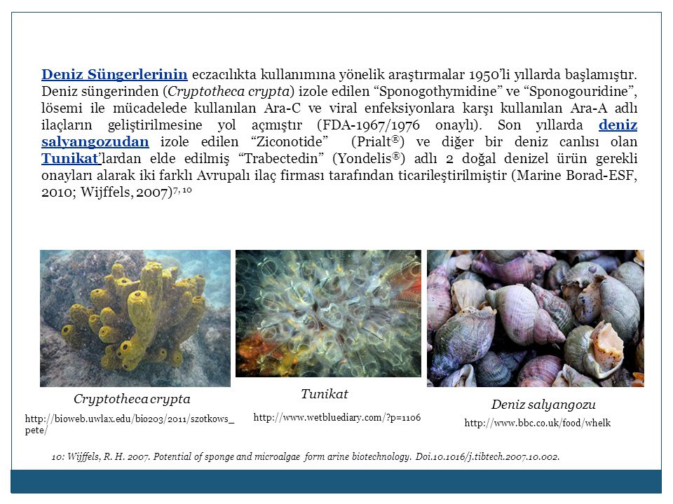 Deniz Süngerlerinin eczacılıkta kullanımına yönelik araştırmalar 1950'li yıllarda başlamıştır. Deniz süngerinden (Cryptotheca crypta) izole edilen Sponogothymidine ve Sponogouridine , lösemi ile mücadelede kullanılan Ara-C ve viral enfeksiyonlara karşı kullanılan Ara-A adlı ilaçların geliştirilmesine yol açmıştır (FDA-1967/1976 onaylı). Son yıllarda deniz salyangozudan izole edilen Ziconotide (Prialt®) ve diğer bir deniz canlısı olan Tunikat'lardan elde edilmiş Trabectedin (Yondelis®) adlı 2 doğal denizel ürün gerekli onayları alarak iki farklı Avrupalı ilaç firması tarafından ticarileştirilmiştir (Marine Borad-ESF, 2010; Wijffels, 2007)7, 10