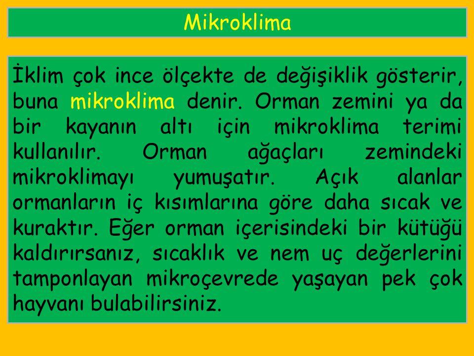 Mikroklima