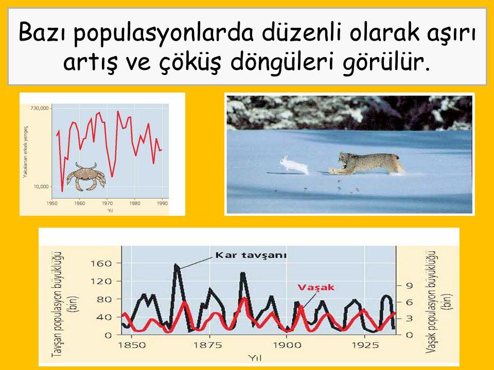 Bazı populasyonlarda düzenli olarak aşırı artış ve çöküş döngüleri görülür.