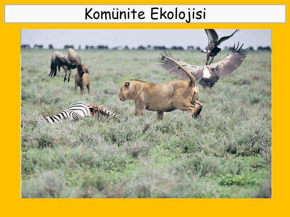 Komünite Ekolojisi