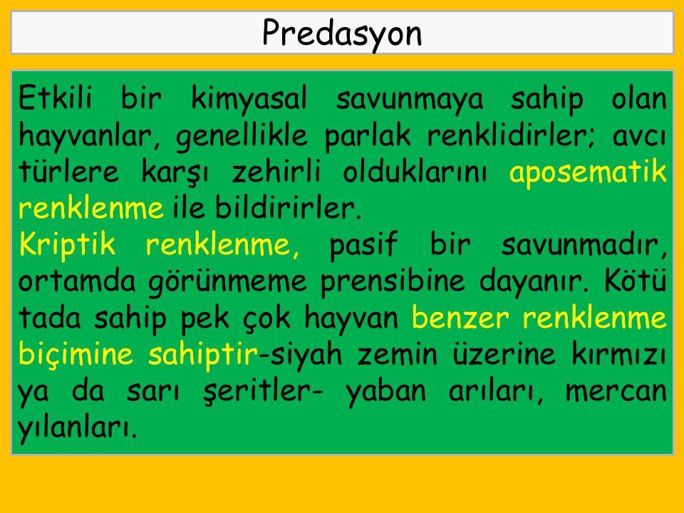 Predasyon