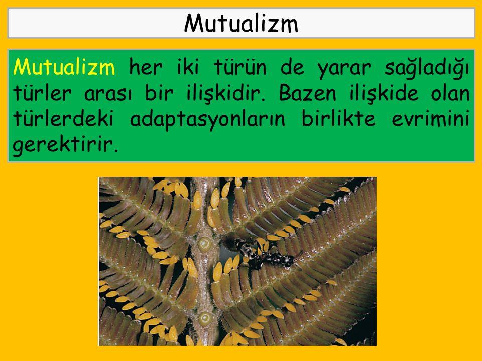 Mutualizm