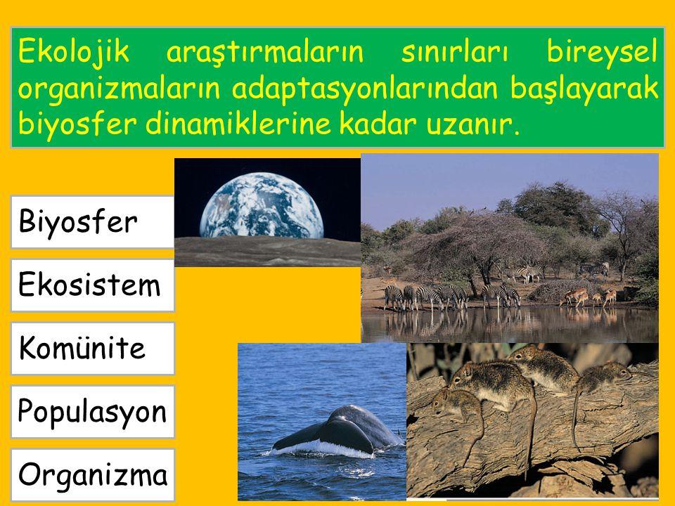 Ekolojik araştırmaların sınırları bireysel organizmaların adaptasyonlarından başlayarak biyosfer dinamiklerine kadar uzanır.