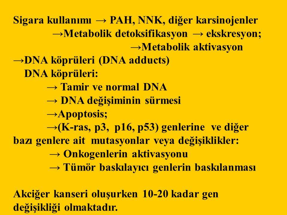 Sigara kullanımı → PAH, NNK, diğer karsinojenler