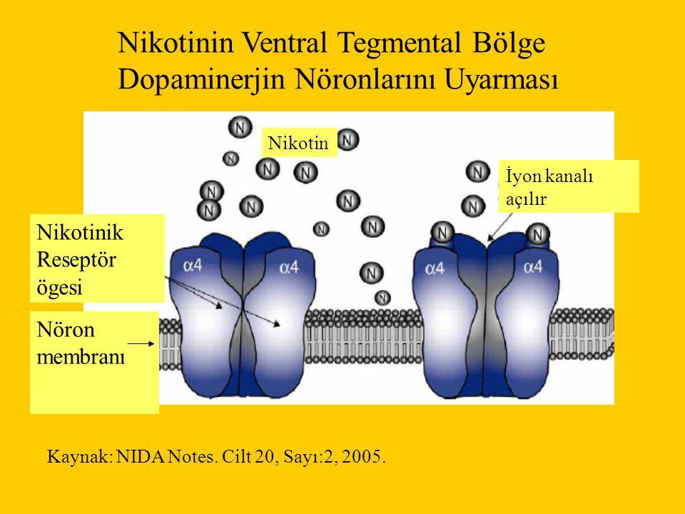 Nikotinin Ventral Tegmental Bölge Dopaminerjin Nöronlarını Uyarması