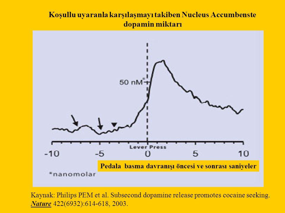 Koşullu uyaranla karşılaşmayı takiben Nucleus Accumbenste dopamin miktarı