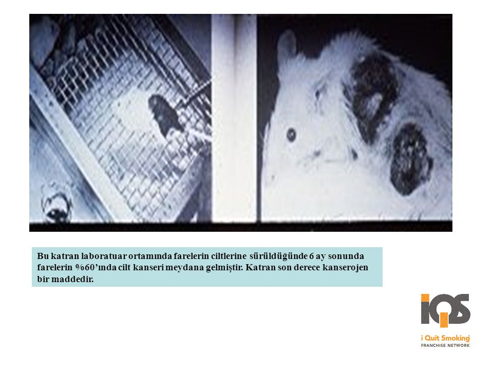 Bu katran laboratuar ortamında farelerin ciltlerine sürüldüğünde 6 ay sonunda farelerin %60'ında cilt kanseri meydana gelmiştir.