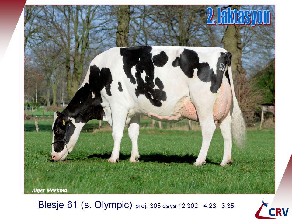 2. laktasyon Blesje 61 (s. Olympic) proj. 305 days 12.302 4.23 3.35