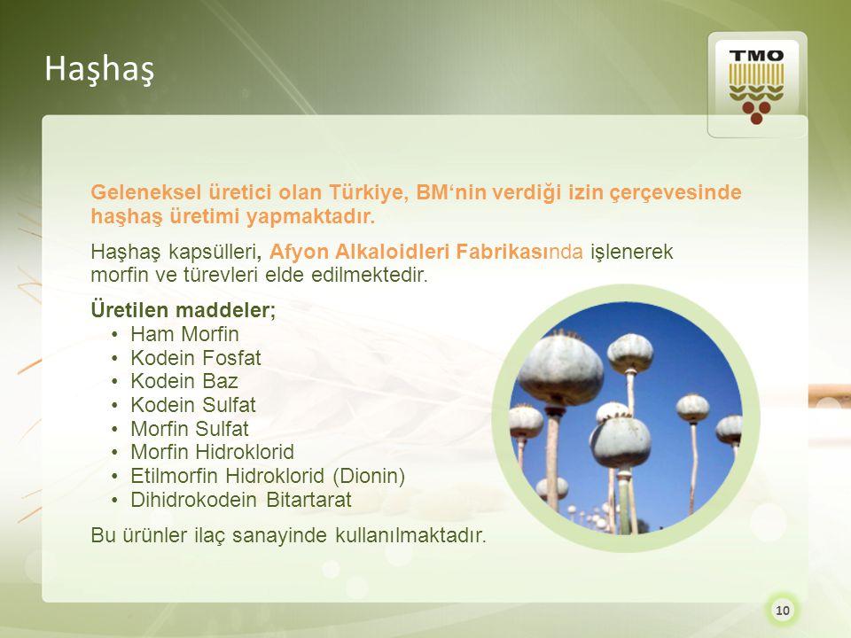 Haşhaş Geleneksel üretici olan Türkiye, BM'nin verdiği izin çerçevesinde haşhaş üretimi yapmaktadır.