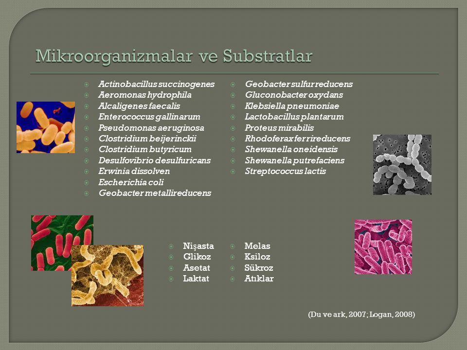 Mikroorganizmalar ve Substratlar