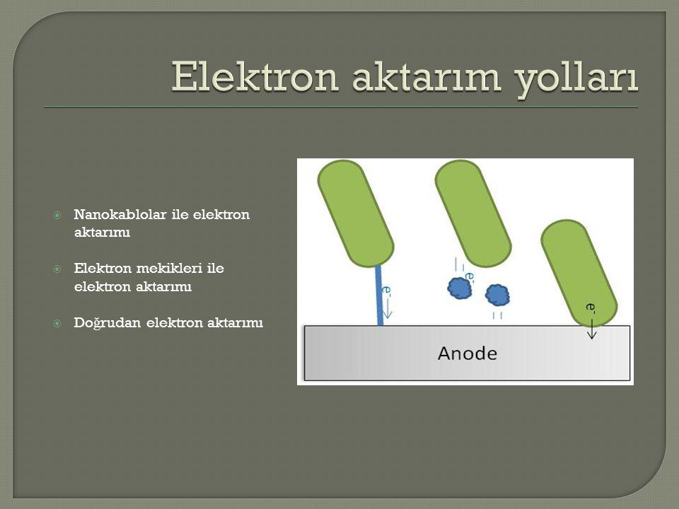 Elektron aktarım yolları