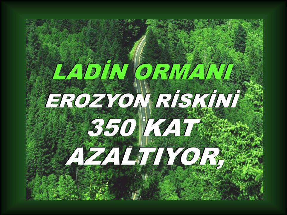 LADİN ORMANI EROZYON RİSKİNİ 350 KAT AZALTIYOR,