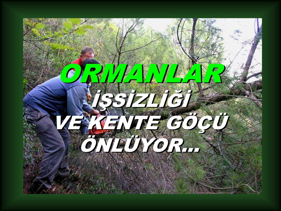 ORMANLAR İŞSİZLİĞİ VE KENTE GÖÇÜ ÖNLÜYOR...