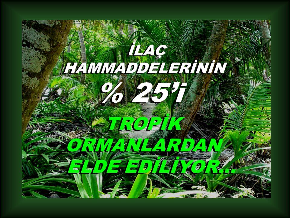 İLAÇ HAMMADDELERİNİN % 25'i TROPİK ORMANLARDAN ELDE EDİLİYOR...
