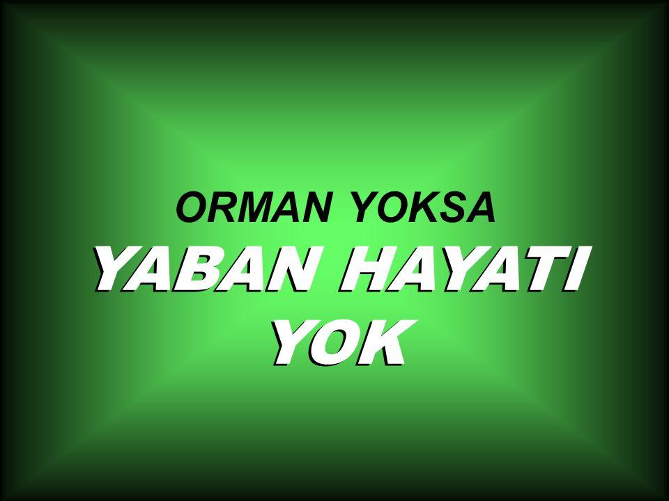 ORMAN YOKSA YABAN HAYATI YOK