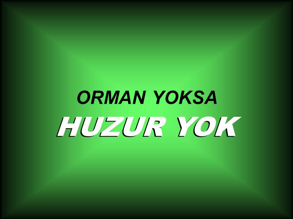 ORMAN YOKSA HUZUR YOK