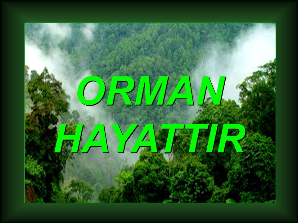 ORMAN HAYATTIR